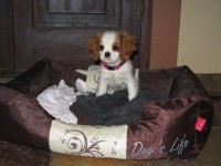 this is my puppy in South Africa