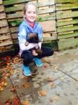 Belgian Shepherd pups for sale
