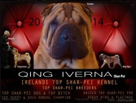 Shar Pei Breeder in Ireland