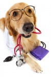 Dog breed health test breed clubs
