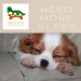 Cavalier Spaniels for sale