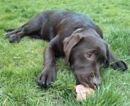 Dog Food Puppy