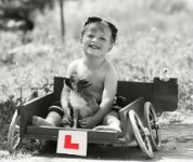 Dog license Ireland