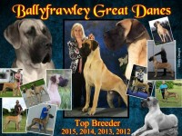 Great Dane Breeders in Ireland