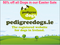 Pedigree Dogs Sale