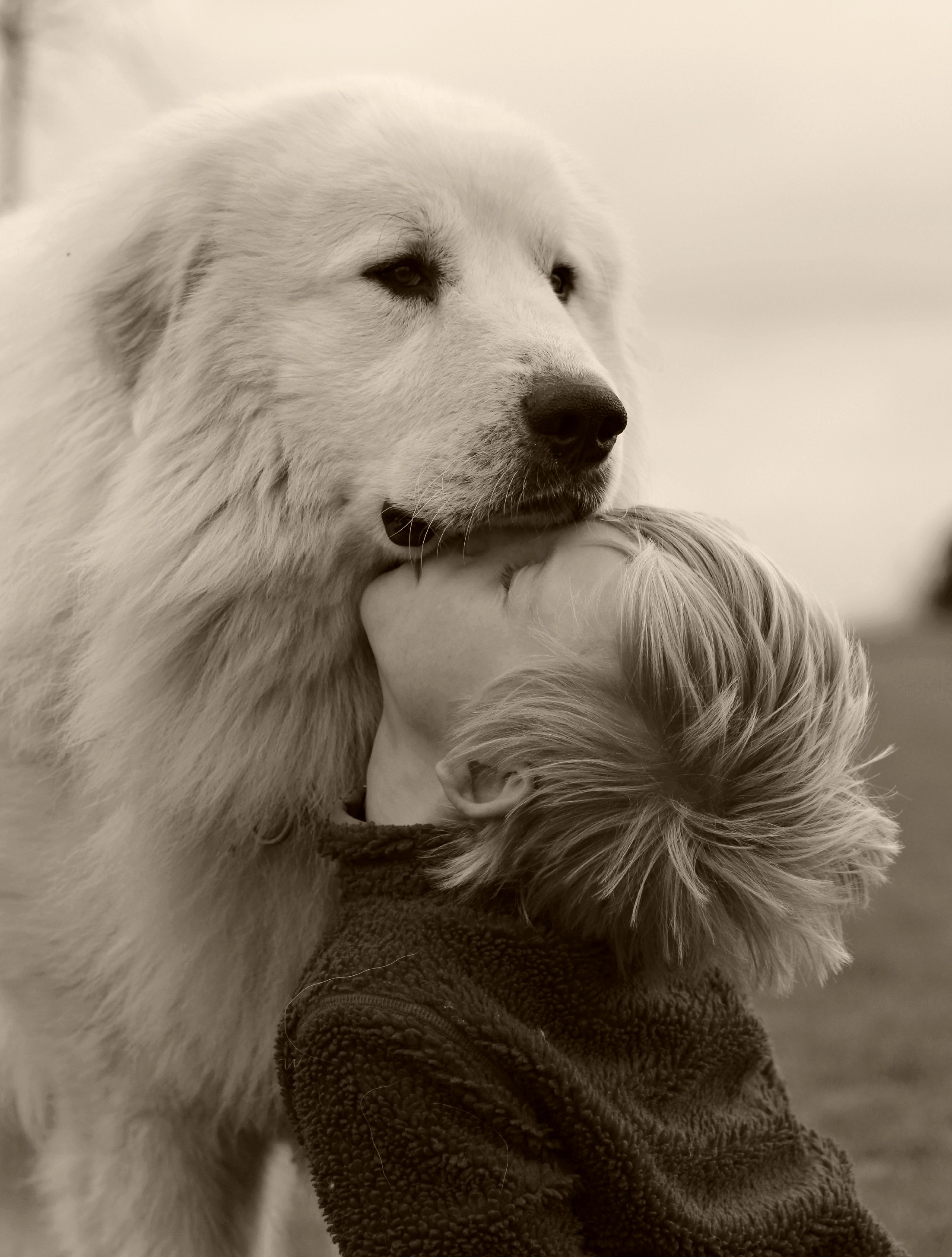 Pyrenean Mountain dogs is this breed right for you ? Check ...