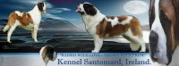 Saint Bernard Dogs